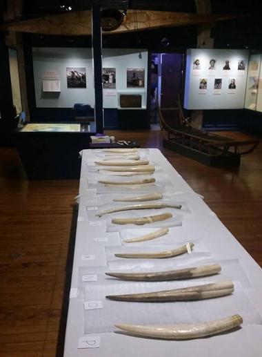Peary-MacMillan Arctic Museum