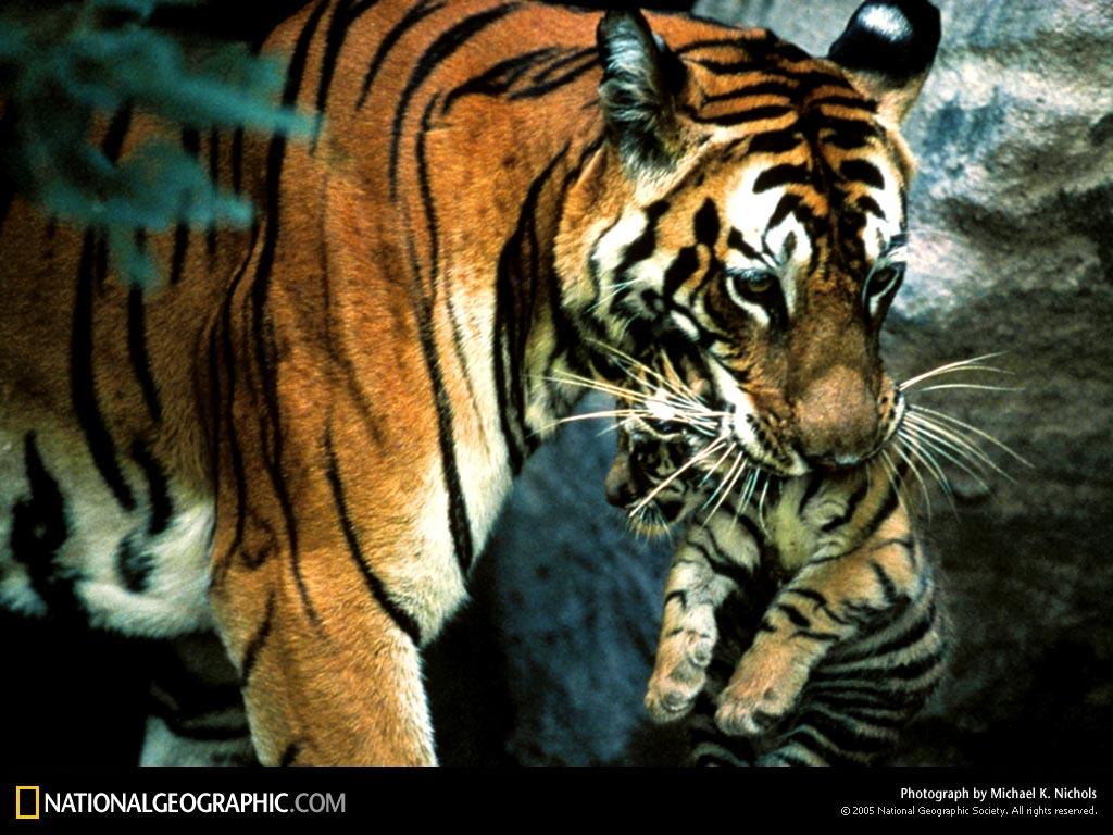 Photography Moments Animal