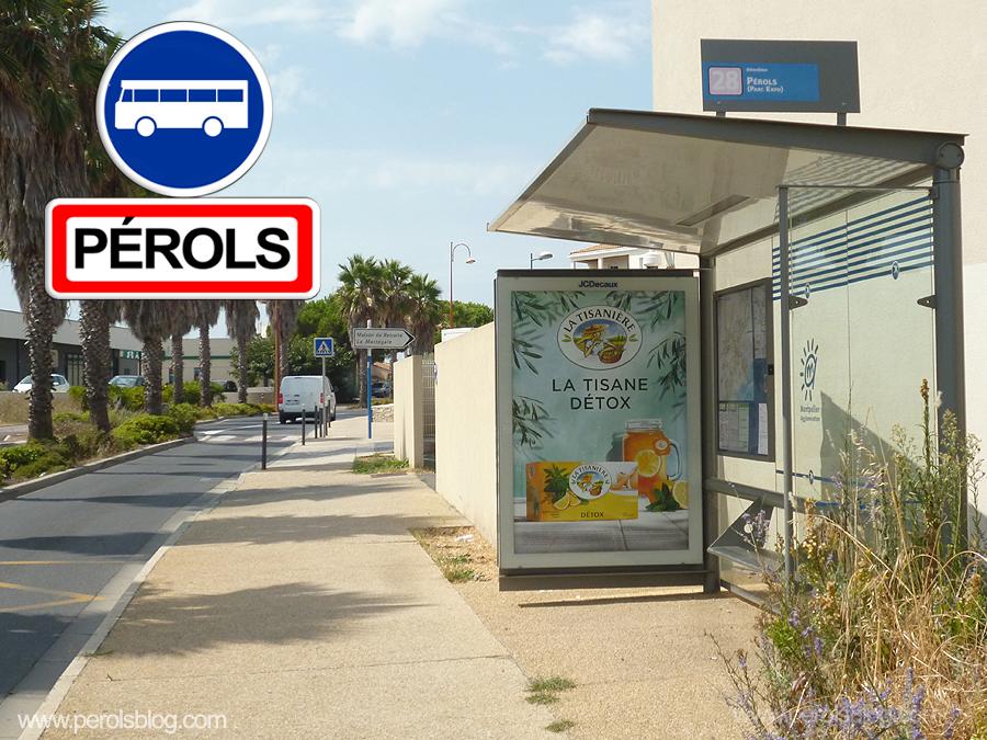 Bus TAM Saint Jean