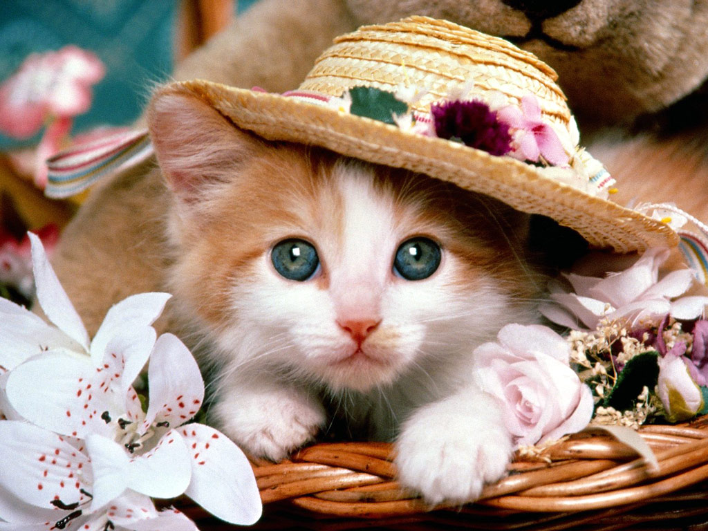 Hd Wallpaper Sweet Cat Pictures Cats Wallpaper