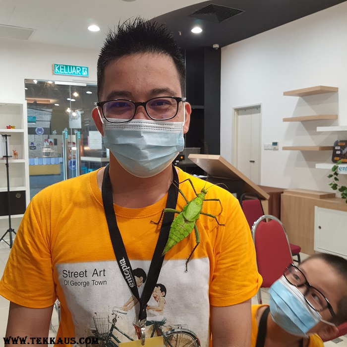 Fun Hour at Entopia Penang-Thorny Stick Insect Female