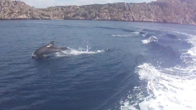 Εκπληκτικές  εικόνες με δελφίνια στον Κορινθιακό (βίντεο)