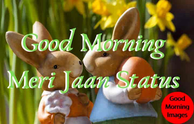Good Morning Meri Jaan Status