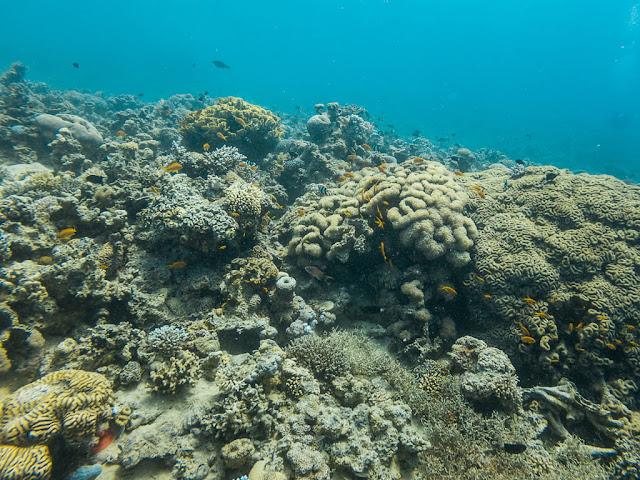 Buceo entre peces y corales en el Japanese Garden, Aqaba, mar Rojo, Jordania