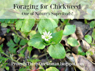 https://proverbsthirtyonewoman.blogspot.com/2017/02/foraging-for-chickweed.html
