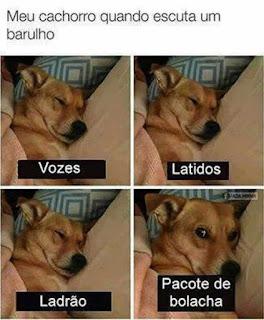 Título das quatro fotos dispostas em duas linhas e duas colunas: Meu cachorro quando escuta um barulho. O cãozinho vira-lata de pelagem amarela e focinho preto  está recostado em almofadas, coberto por uma manta rosa claro. Abaixo de todas as fotos, uma tarja preta com escrito em letras brancas.  Q1: cãozinho de olhos fechados : Vozes.  Q2: a cena repete-se: Latidos.  Q3: continua na mesma posição: Ladrão.  Q4: o cão de olhos abertos e atentos : Pacote de bolacha.