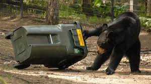 DEP Offers Tips for Morris County Residents to Reduce Risks of Black Bear Encounters this Fall