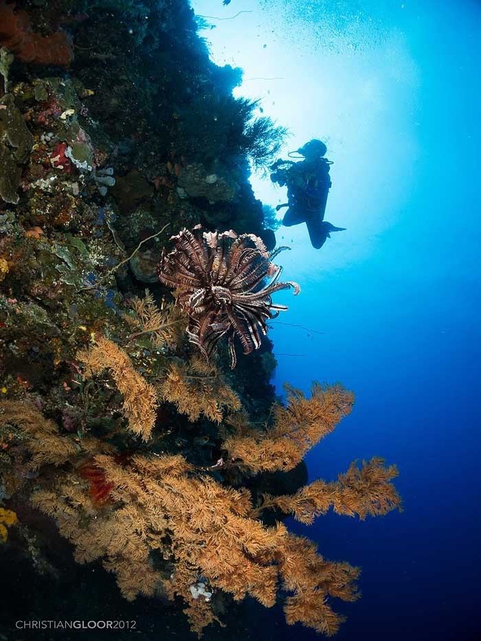 Harga Tiket Masuk Taman Nasional Laut Bunaken