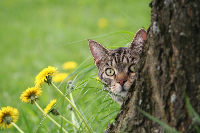 Pets%2BAbs - Common Diseases That May Affect Your Cat