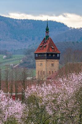 Pfälzer Mandelpfad | Etappe 05 Edenkoben – Birkweiler | Wandern Südliche Weinstraße | Mandelblüte Pfalz 12