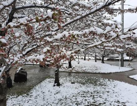 Τορόντο, Καναδάς : από τους +20°C στους -6°C μέσα σε λίγες μέρες