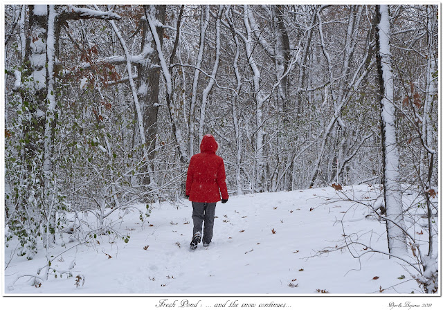Fresh Pond: ... and the snow continues...