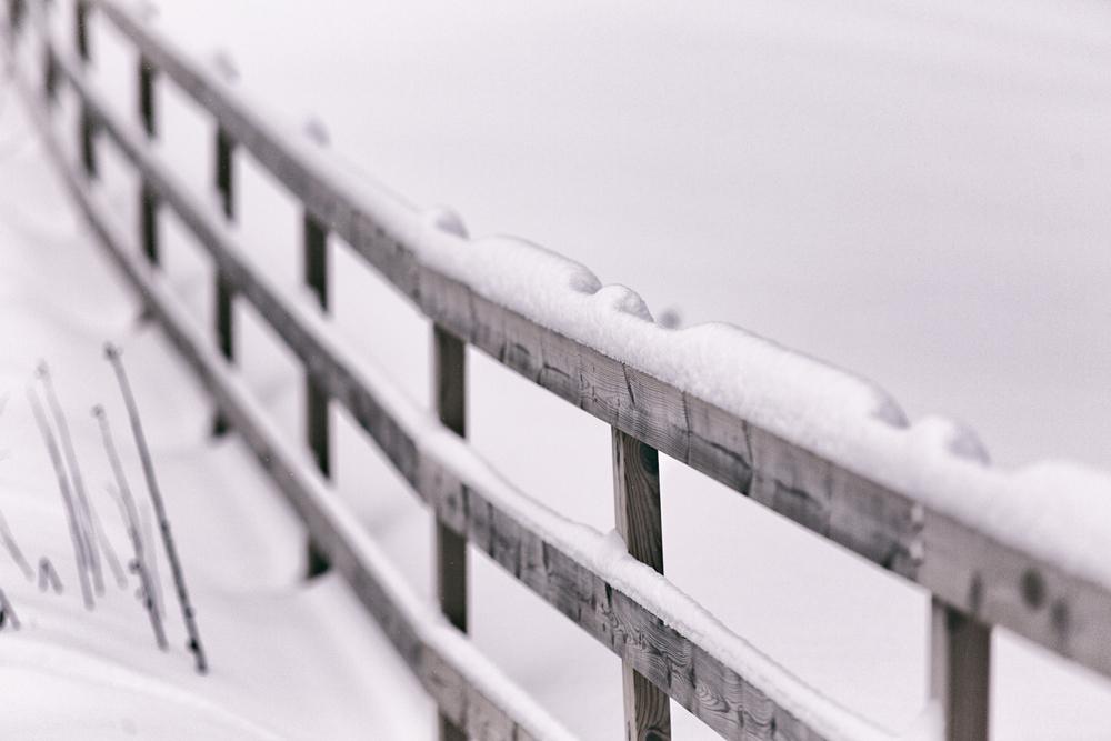Espoo, Suomi, Finland, experience finland, discover finland, talvi, winter, january, tammikuu, valokuvaaja, Frida Steiner, Visualaddict, visualaddictfrida, trees, puut, nature, luonto, luontokuva, naturephotography, chill, frost, aita, fence