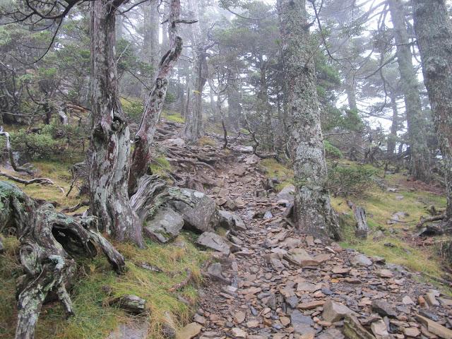 IMG 5979 - 台中登山│台灣第二高峰,雪山主峰、東峰兩天一夜攻頂!這兩天是我最難熬的一夜