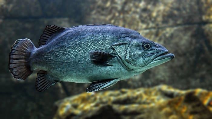 Do Fish Sleep? How Do Fish Sleep with Their Eyes Open?