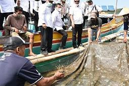 Keputusan KKP Beri Izin Budidaya Lobster di Luar Wilayah Sumber Benih Dipertanyakan