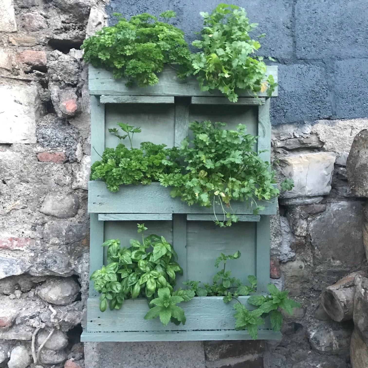 pallet herb garden diy old victorian new. Black Bedroom Furniture Sets. Home Design Ideas