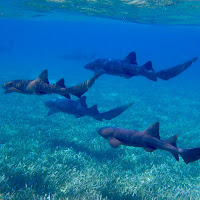 Free Technology for Teachers: Sharks in Street View! 1