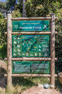 Table Mountain National Park Newlands Forest