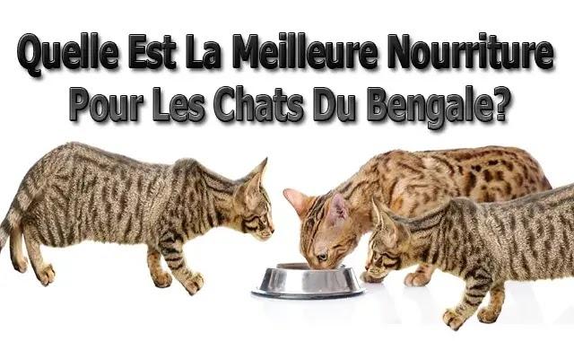 Quelle Est La Meilleure Nourriture Pour Les Chats Du bengal?