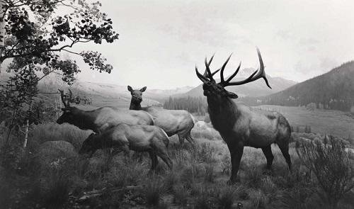 Hiroshi Sugimoto | fotos en blanco y negro chidas, imagenes de siervos