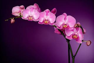 12 növény, amik pozitív energiát teremtenek otthonodban!