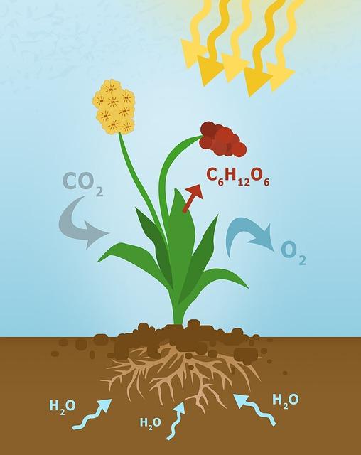 L'agricoltura ed emissioni di CO₂
