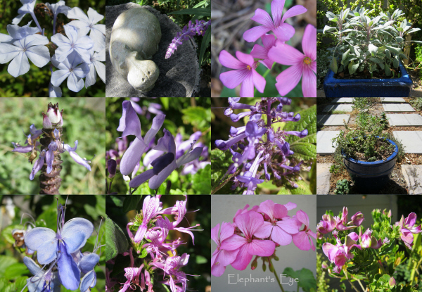 Pink and purple flowers in March