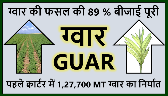 ग्वार की बीजाई निर्धारित लक्ष्य के 89% क्षेत्र में पूरी हुई l   Guar crop sowing has completed on 89% of target guar sowing area,  Guar, guar gum, guar price, guar gum price, guar demand, guar gum demand, guar seed production, guar seed stock, guar seed consumption, guar gum cultivation, guar gum cultivation in india, Guar gum farming, guar gum export from india , guar seed export, guar gum export, guar gum farming, guar gum cultivation consultancy, today guar price, today guar gum price, ग्वार, ग्वार गम, ग्वार मांग, ग्वार गम निर्यात 2018-2019, ग्वार गम निर्यात -2019, ग्वार उत्पादन, ग्वार कीमत, ग्वार गम मांग, Guar Gum, Guar seed, guar , guar gum, guar gum export from india, guar gum export to USA, guar demand USA, guar future price, guar future demand, guar production 2019, guar gum demand 2019, guar, guar gum, cluster beans, guar gum powder, guar gum price, guar gum uses, ncdex guar, guar price, guar gum price today, cyamopsis tetragonoloba, ncdex guar gum price, guar beans, guar rate today