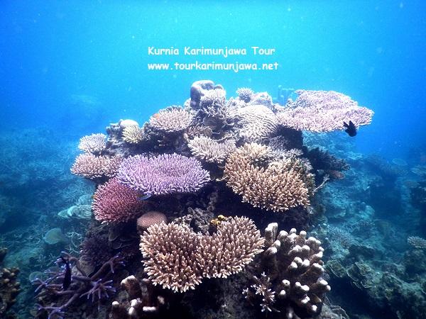 ekosistem terumbu karang di karimunjawa