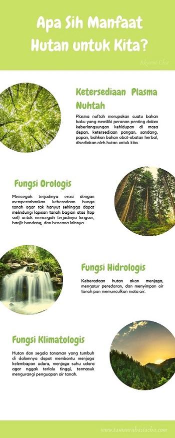manfaat-hutan