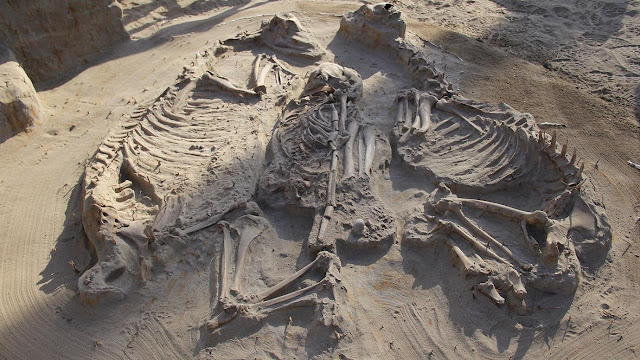 Ancient DNA help scientists study human evolution: 'It's like a time capsule'