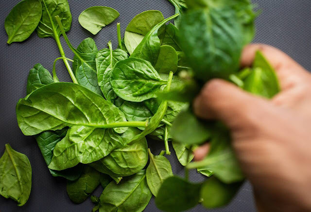 IQF Spinach Optimal Processing