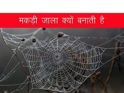 मकड़ी के जाला क्यों और कैसे बनाती है । मकड़ी के जालों के प्रकार । मकड़ी के खून का रंग । Spider Facts in Hindi