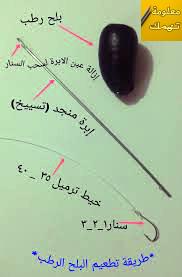 طريقة تطعيم البلح للصيد في النيل