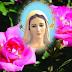 05 sierpnia prawdziwy dzień narodzin Matki Bożej - Halina Łabądź