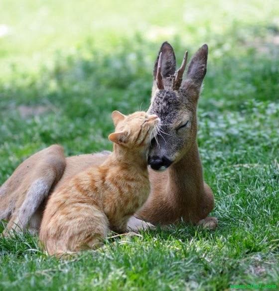 imagen tierna de gatito y conguro