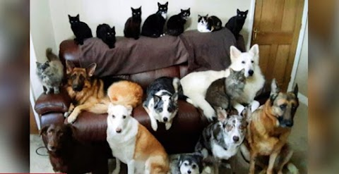 The woman wanted a picture of her 17 animals  it took her a week to get a proper one