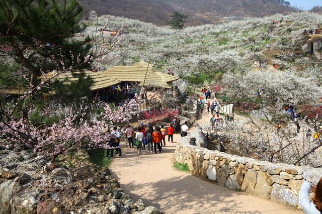 5-tips-traveling-ke-korea-pada-musim-semi