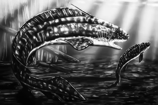Orthacanthus Prehistoric Shark