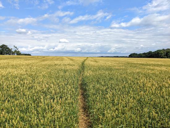 Follow Kimpton footpath 30 across the crop heading NNE