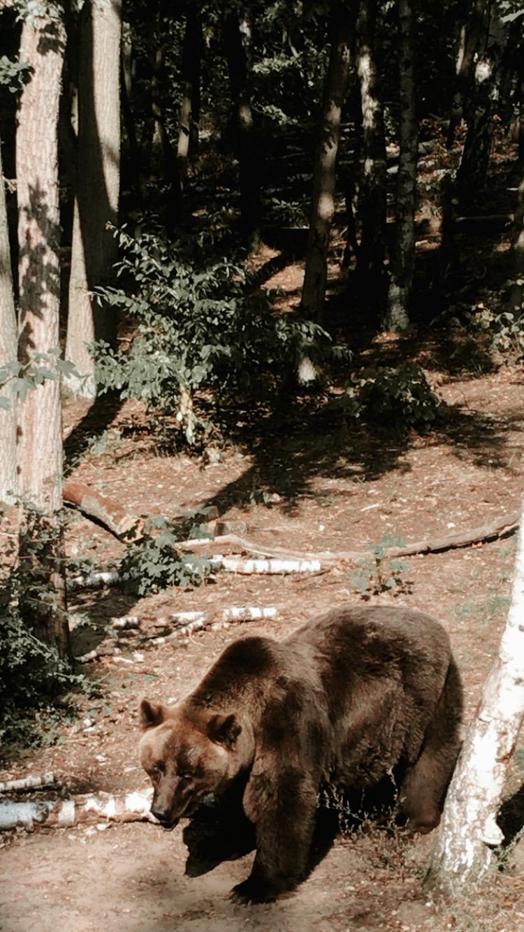 Poznańskie Zoo