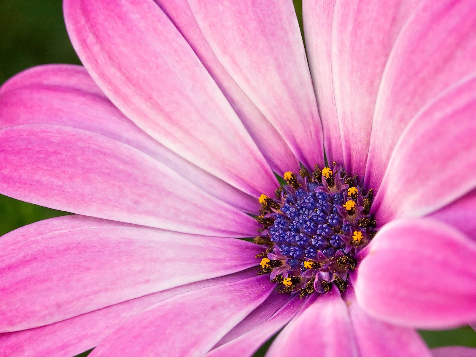 HD Wallpapers: Flowers Wallpaper