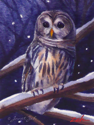A barred owl on a snowy winter night