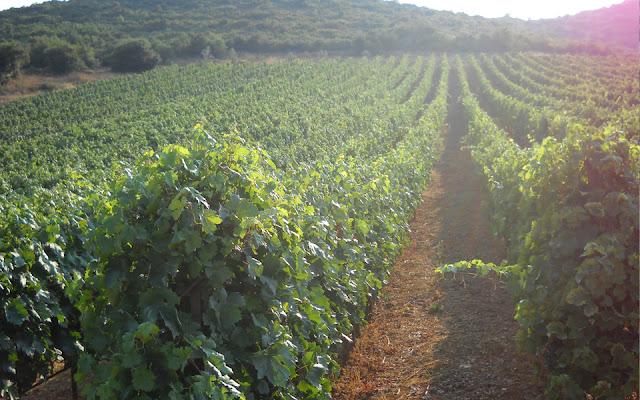 красные почвы на немейском винограднике