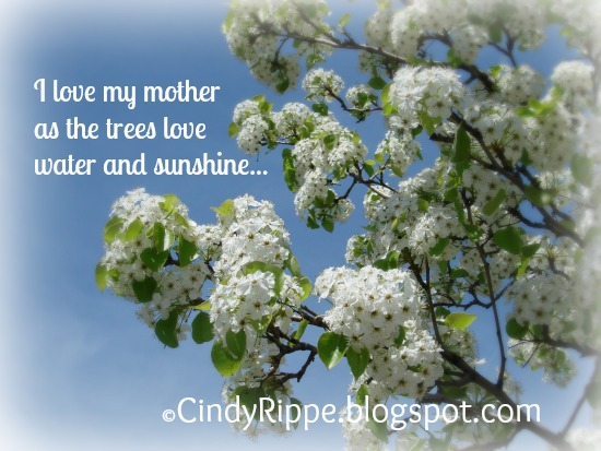 Mom, Family, Mother's Day, crab-apple blossoms, white tree, quote by A.Radici, Florals-Family-Failth, Cindy Rippe