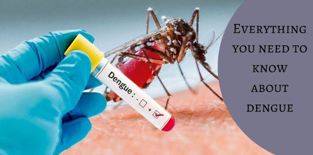 Everything You Need to Know About Dengue