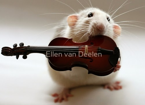 15-The-Violinist-Musical-Dumbo-Rat-Ellen-Van-Deelen-www-designstack-co