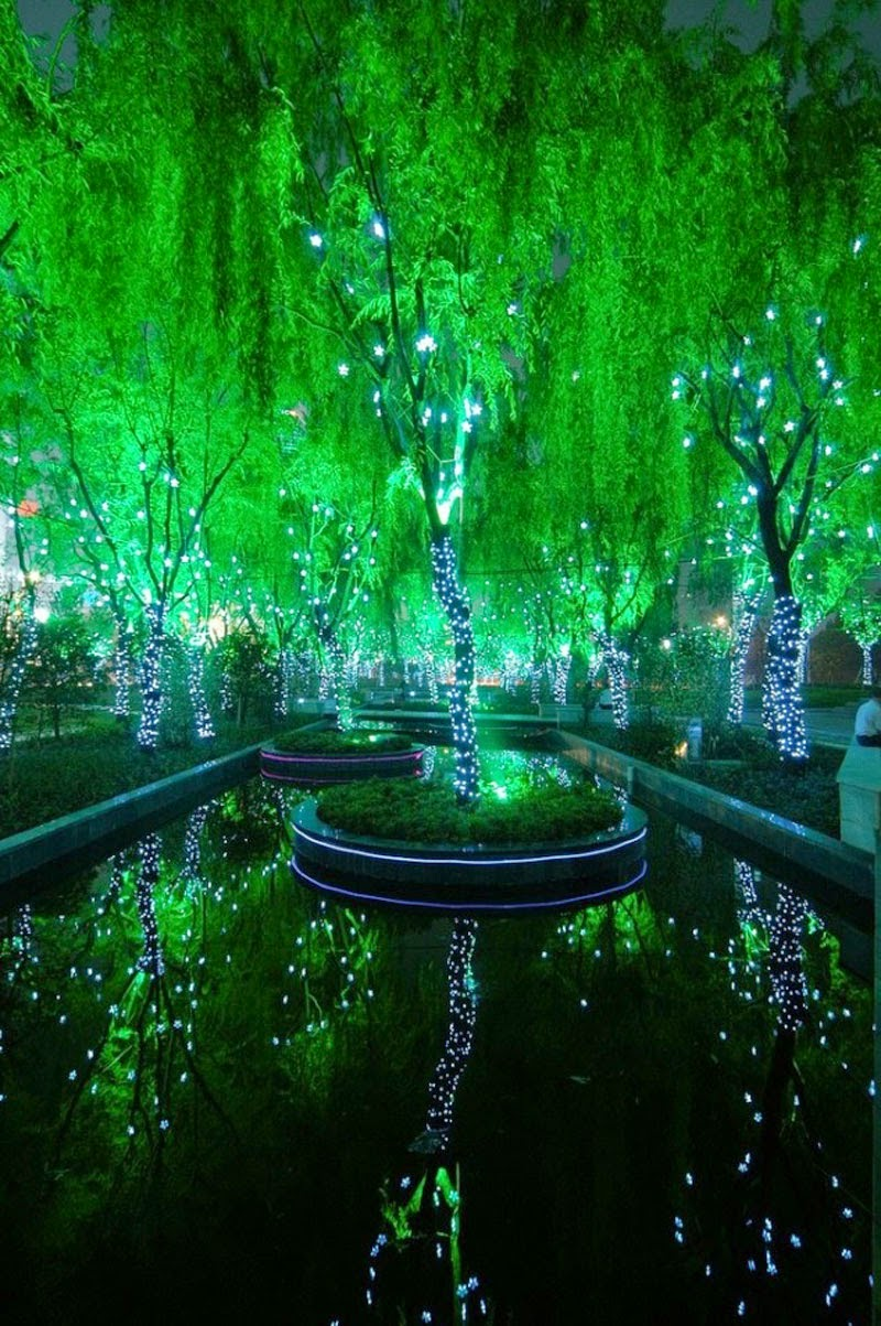 4. The Magic Forest, China - 5 Sights So Incredible You Won't Believe They're Real