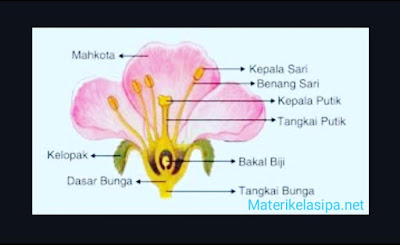Tabel Bagian - bagian Bunga dan Fungsinya